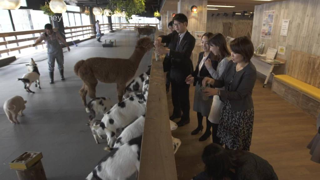 Could destiny offices be homes for plantation animals?